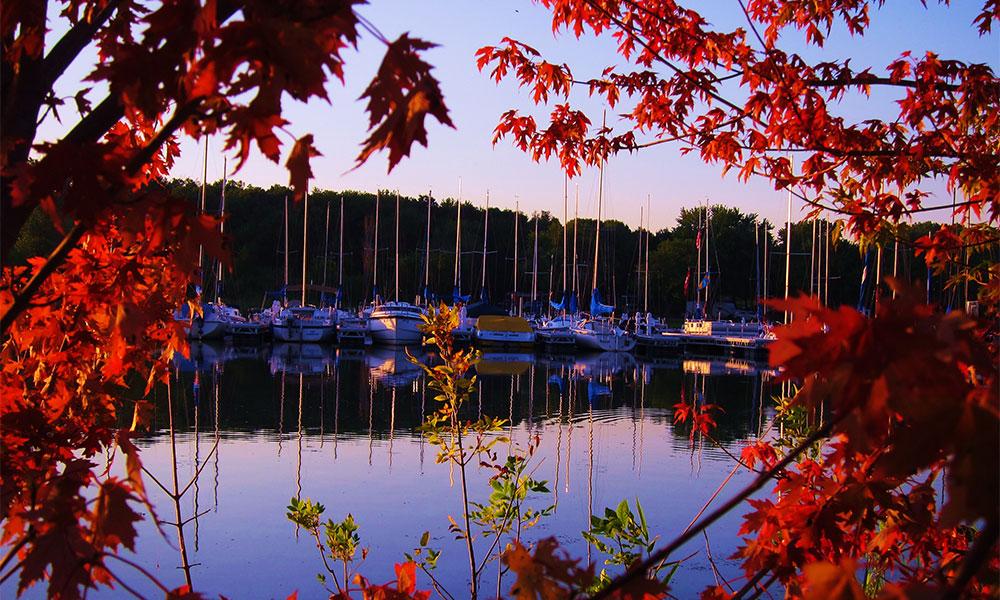 marina picture taken through fall leaves